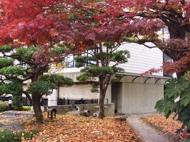 11月、紅葉が美しく庭を真っ赤に染めてくれます。